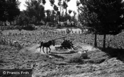 Madrid, Donkey Operated Water Pump 1960