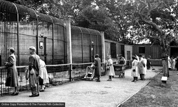 Photo of Maidstone, Zoo Park c.1955
