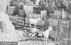 Maidstone, Zoo Park, The Royal Goat Enclosure c.1955