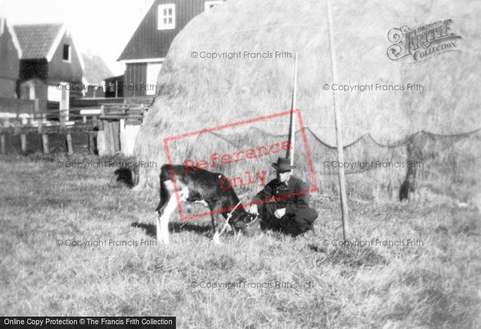Photo of Marken, Man Feeding A Goat c.1930