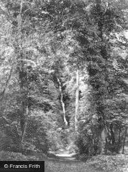 Masham, Hackfall, The Cascade c.1874