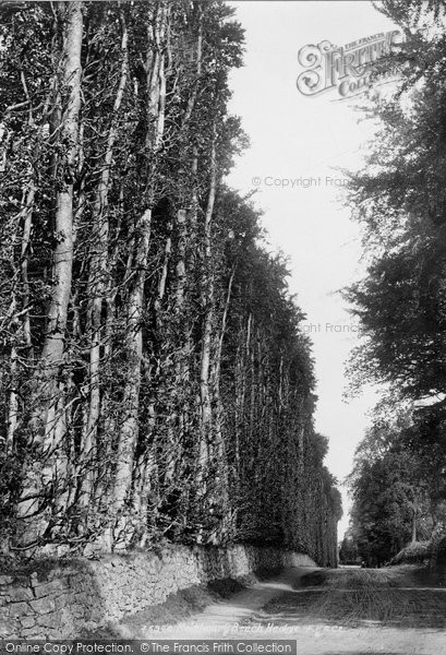 Photo of Meikleour, Beech Hedge 1900