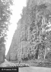 The Beech Hedge c.1930, Meikleour