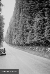 The Beech Hedge c.1935, Meikleour
