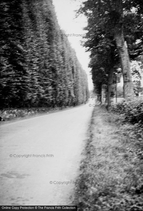 Photo of Meikleour, The Beech Hedge c.1935