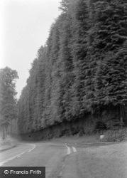 The Beech Hedge c.1964, Meikleour