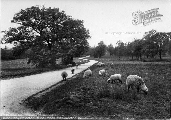 Merrow, Common 1909