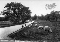 Merrow, Common 1909