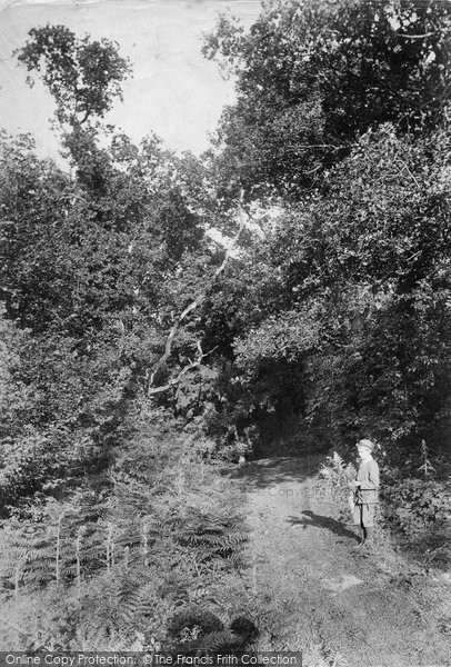 Merrow, The Copse 1904