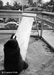 Aquarium Zoo, Bear Drinking From A Bottle c.1935, Miami