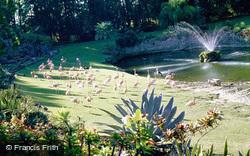 Flamingos 1982, Miami