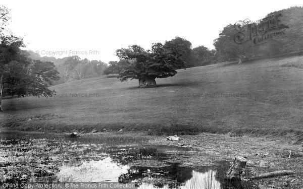 Photo of Midhurst, Cowdray Park, Queen Elizabeth's Oak 1921