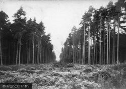 Midhurst, The Pinewoods 1912