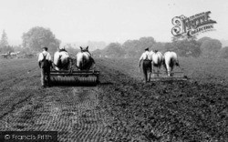 Milford, Farmhorses At Work c.1955