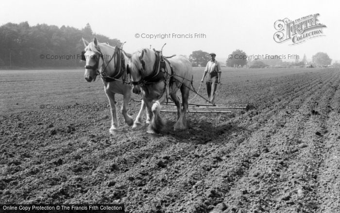 Photo of Milford, Farming With Horses c.1955