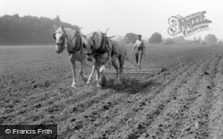 Farming With Horses c.1955, Milford