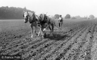 Milford, Farming with Horses c1955