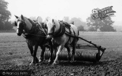 Milford, Rolling A Field Using Horses c.1955