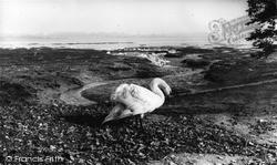 Mistley, The Swans c.1955