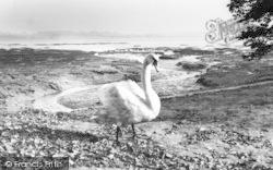 Mistley, The Swans c.1960