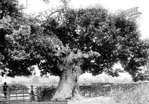 Mortimers Cross, Battle Oak 1906