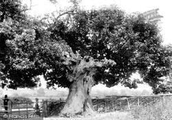Mortimer's Cross, Battle Oak 1906