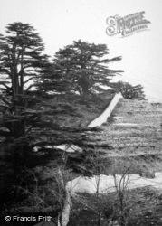 Mount Lebanon, The Cedars Of Lebanon 1965