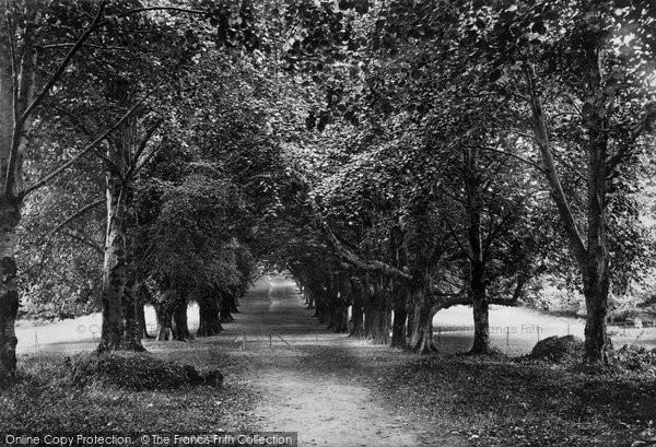 Photo of Muckross, Abbey, Avenue 1897