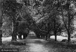 Muckross, Abbey, Avenue 1897