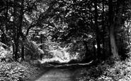 Nettlebed, the Woods c1955