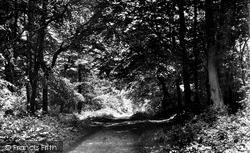 Nettlebed, The Woods c.1955
