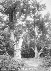 New Forest, Bolderwood Big Oaks 1890