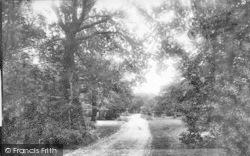 New Forest, Bolderwood Road 1890