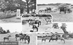 New Forest, Composite c.1960