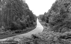 New Forest, Near Burley c.1955