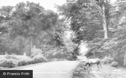 New Forest, On The Bournemouth Road 1906