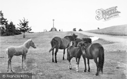 New Forest, Ponies c.1955