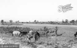 New Forest, Ponies c.1960