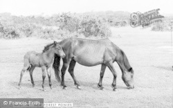 New Forest, Pony And Foal c.1965