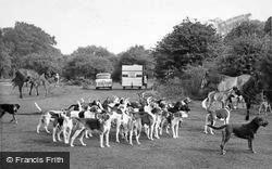 New Forest, The Buck Hounds c.1960