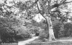 New Forest, View From Cut Walk Hill 1908