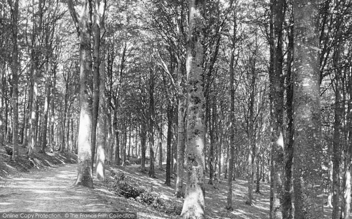 Photo of Newton Abbot, Haccombe Woods 1890
