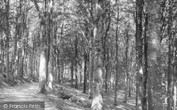 Newton Abbot, Haccombe Woods 1890