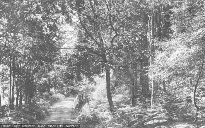Photo of Newton Abbot, Milber Woods 1896