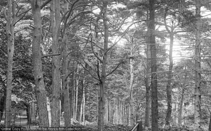 Photo of Newton Abbot, Milber Woods 1907