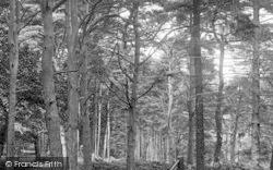 Newton Abbot, Milber Woods 1907