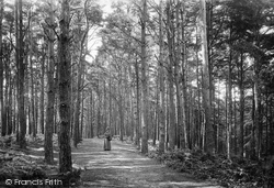 Newton Abbot, Pine Walk, Milber Down 1890
