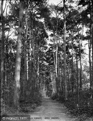 Newton Abbot, Pine Woods 1915