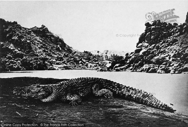 Photo of Nile, Crocodile On A Sand Bank 1857