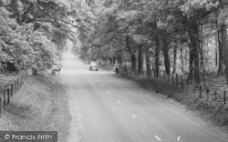 Norley, Road In Delamere Forest c.1960